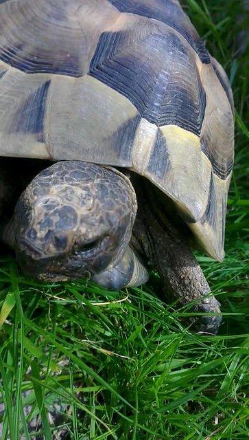 Sur un poème - Le lièvre et la tortue  PPR semaine 26