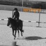 le blog de chevalchouki