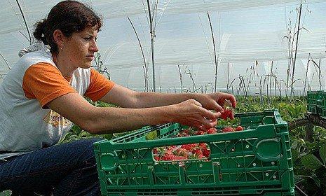 AgevoBLOG - La piazza dei finanziamenti pubblici: Premio di primo insediamento: in Emilia-Romagna nuovo bando per imprese agricole avviate da giovani dopo il 1/10/2013