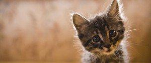 Voici pourquoi, avoir un chat rend plus heureux et en meilleure santé