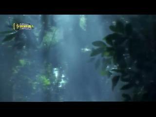 pouvoir d animaux la jungle part1