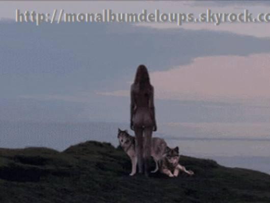 un  clique  sur  j'aime  cette  page !!!!!  pour les loups  merci pour eux