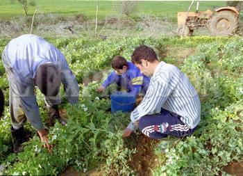 Maison de l'Algérie Blog-Jeunes: La jeunesse algérienne au centre du débat en ce mois de novembre 2014 : Revue de presse