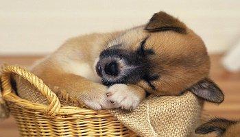 Pétition : Contre la maltraitance des chiens et chats mangés en Chine !