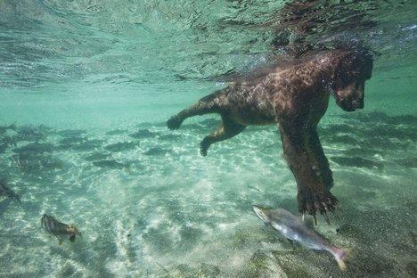 Katmai National Park | Tabulaa