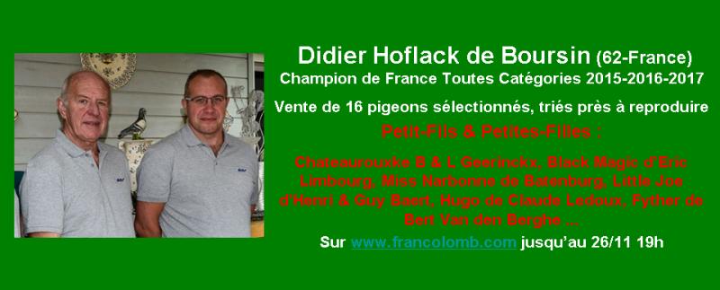 Vente : Didier Hoflack de Boursin : 16 pigeons - Francolomb