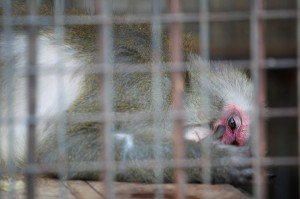 Protect Captive Animals in South Korea from Cruelty