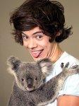 Petites infos sur One Direction