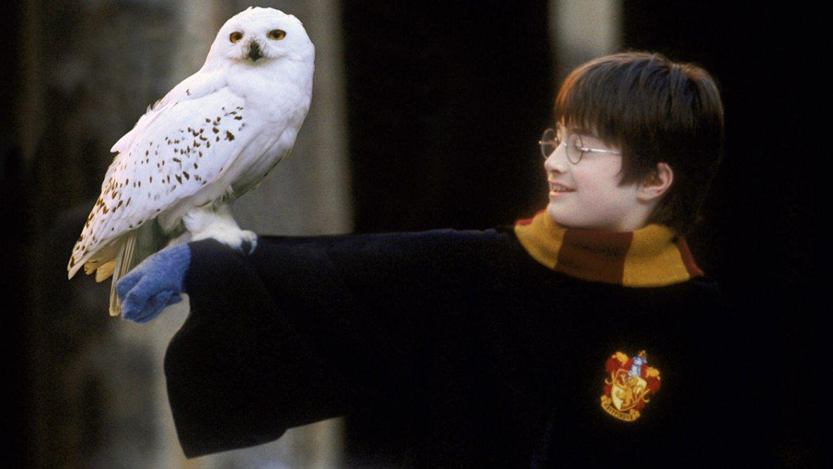 En Asie, les chouettes sauvages menacées par les fans d'Harry Potter