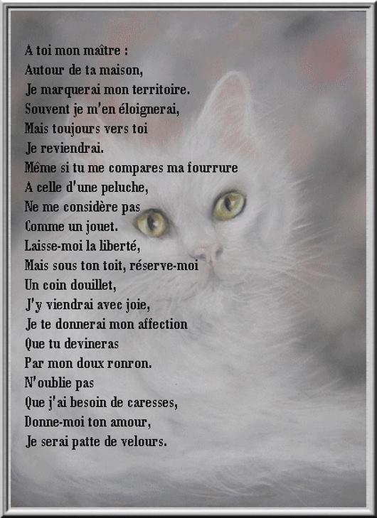 Une pensée pour nos amis les animaux , DITE NON A L ABANDON ET LA V...