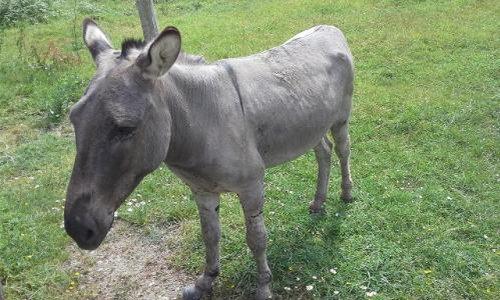 Pétition : Pour améliorer les conditions de vie du petit âne !