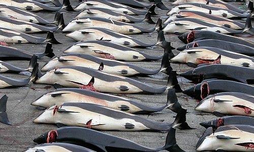 Pétition : Sauvons les dauphins !