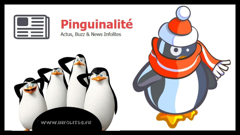 Pinguinalité - Photos