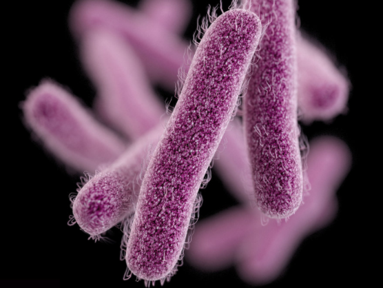 Shigellosis: Symptoms, Treatment & Prevention ~ Health