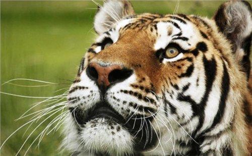 Génération Tigres fête son quatrième anniversaire - Leetchi.com