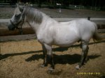 sara+atlantic equitation