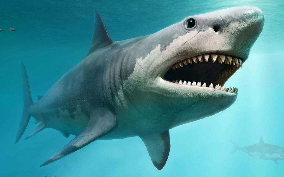 Le requin blanc a-t-il exterminé le mégalodon?