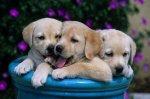 le blog de animals-needs-help