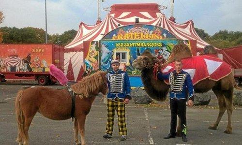 Pétition : Pour l'interdiction et départ du cirque Fratellini à Tourlaville
