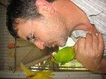 le blog de canaris-arlequins