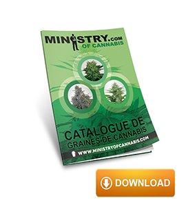 Graines de Cannabis - Ministry of Cannabis