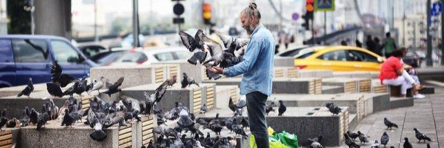 Si les humains vivaient comme des pigeons...