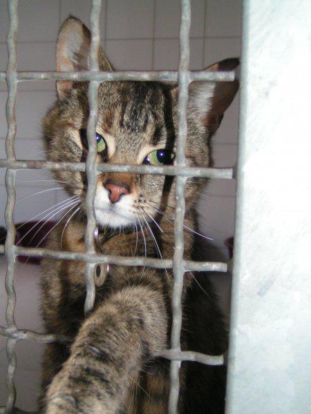 Maltraitance animale : les bons reflexes | GAIA
