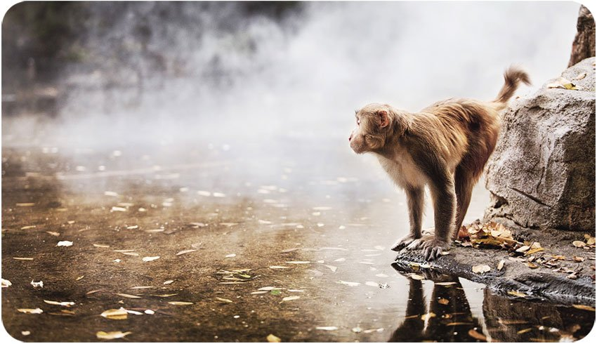 Wisdom Begins with Curiosity. - Daily Poetry and Stories Portal | Easy Branches