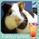 le blog de Funnycochon