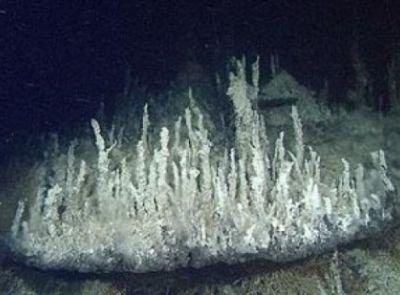 Une source hydrothermale inconnue découverte dans le Pacifique - posté par webmaster à Sercomxat