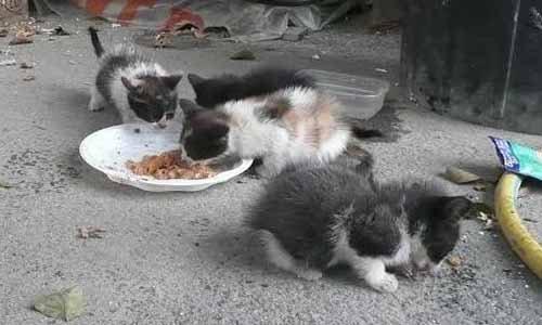 Pétition : Le maire de Graulhet (Tarn) doit signer la convention avec 30 millions d'amis pour la stérilisation des chats errants