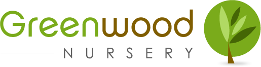 Buy Sedum Ground Covers online at Greenwood Nursery