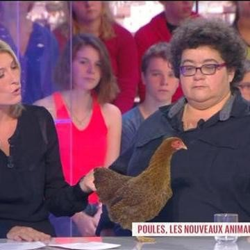 Les animaux : Poule, nouvel animal de compagnie ? - Le Grand 8 - 30/09/2013