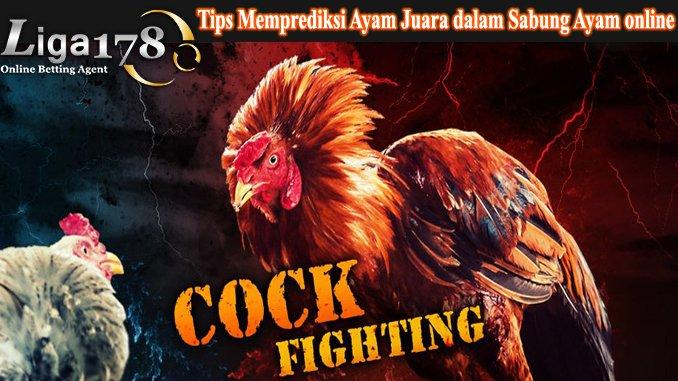 Tips Memprediksi Ayam Juara dalam Sabung Ayam Online