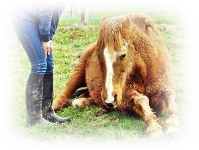 Ce n'est pas un cheval dans un manège. C'est un partenaire de danse et vous êtes sur une piste.