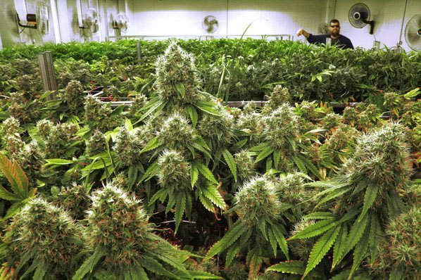 Get Benefits of Medical Marijuana For A Healthy Life - BlondiepieRadio.com