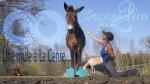 Une mule diplômée à La Cense… - Ulule