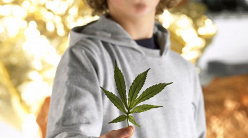 No links between Marijuana use and IQ decline