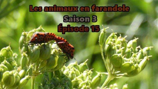 Les animaux en farandole: saison 3: épsiode 15