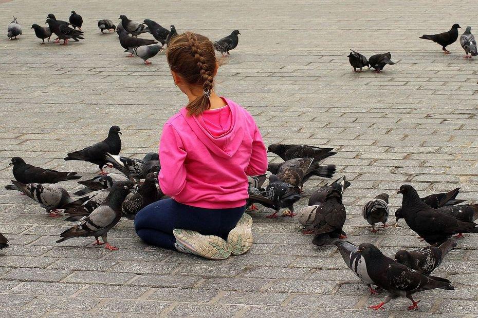 Saint-Junien : indésirables pigeons