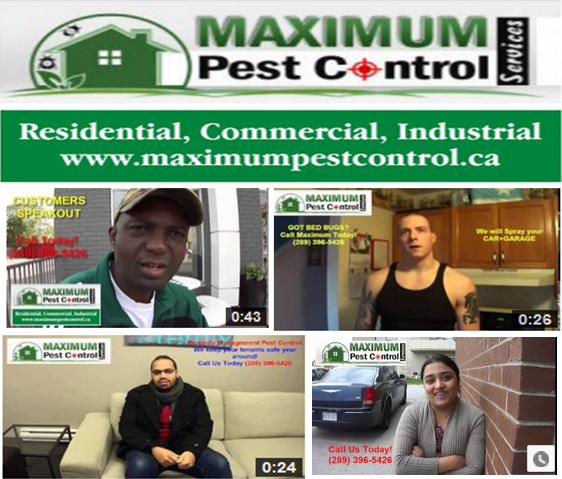 Require Pest Control Service in Burlington Ontario? Pest Control Service - Bedbugs Removal Services - Rodents Pest Control.