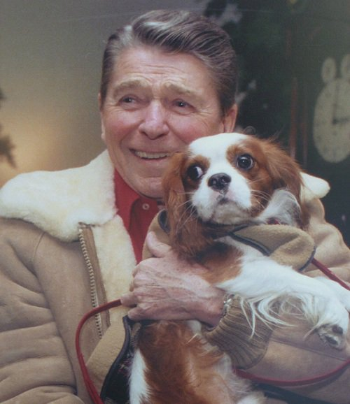 14 Celebrities With Cavalier King Charles Spaniels