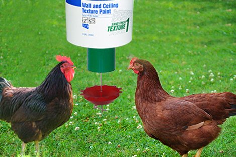 Rhode Island Red Chicken Using Automatic Chicken feeder ...