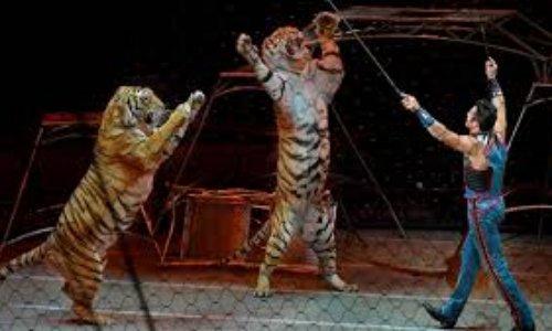 Pétition : NON aux cirques avec animaux à Roubaix ! #CirquesSansAnimaux