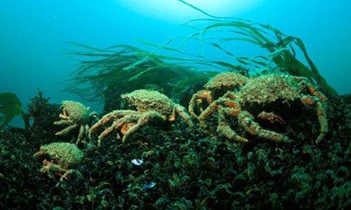 Pétition : Relâchons les crustacés en milieu naturel !