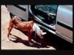 abandons de chien