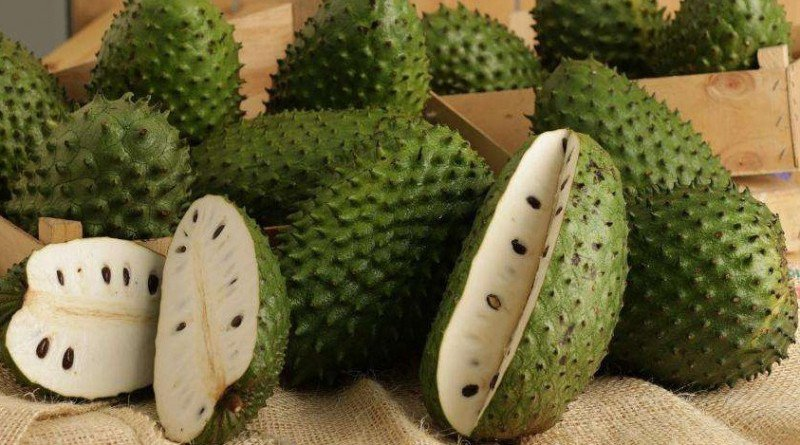 The Leaves of Soursop Are Much Stronger at Killing Cancer Cells Than Chemotherapy - Healthy Food Society