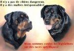 Pour le respect de la loi suisse sur la protection des animaux et ce pour tous les chiens y compris ...