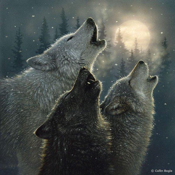 Prit sur le blog de yuuwakusuru-wolf