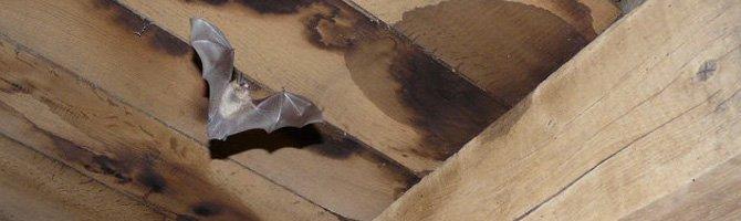 Menaces: Groupe de travail Chauve-souris de Natagora - association de protection de la nature
